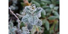 Эмикс и защита от весенних заморозков