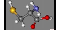 Аминокислоты и их роль в сохранении здоровья
