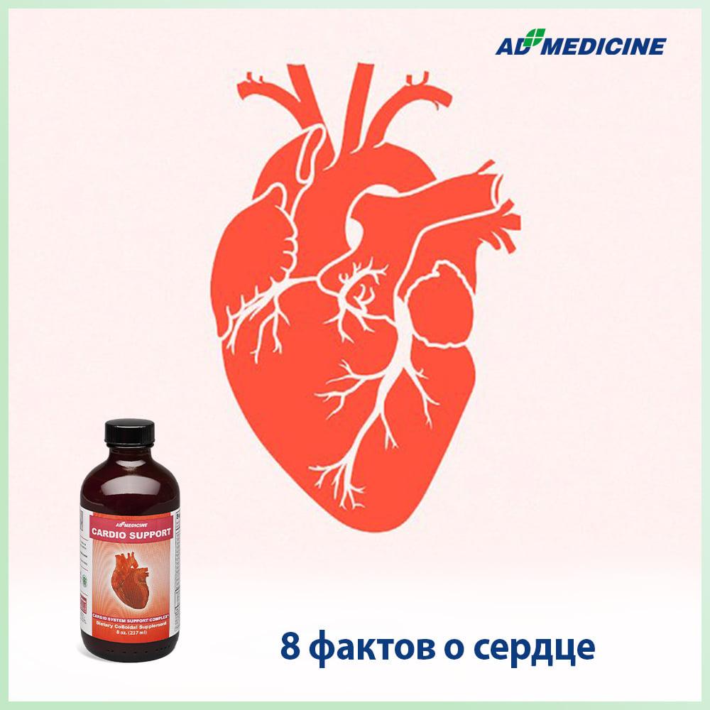 8 фактов о сердце