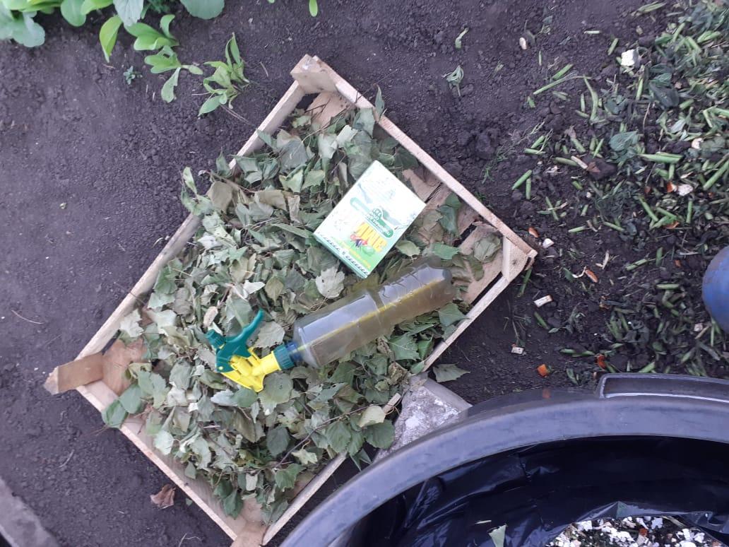 Зеленые ЭМ-подкормки при дефицитах микроэлементов в почве