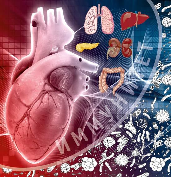 Опасные связи: инфекционные поражения организма и болезни сердца
