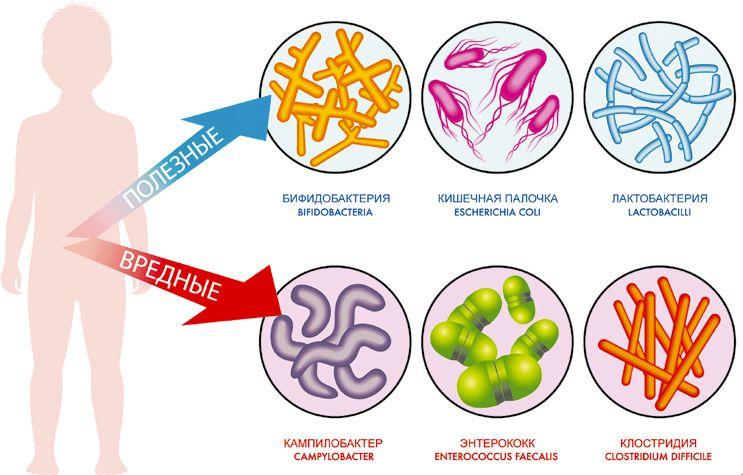 Бактерии вредные и полезные