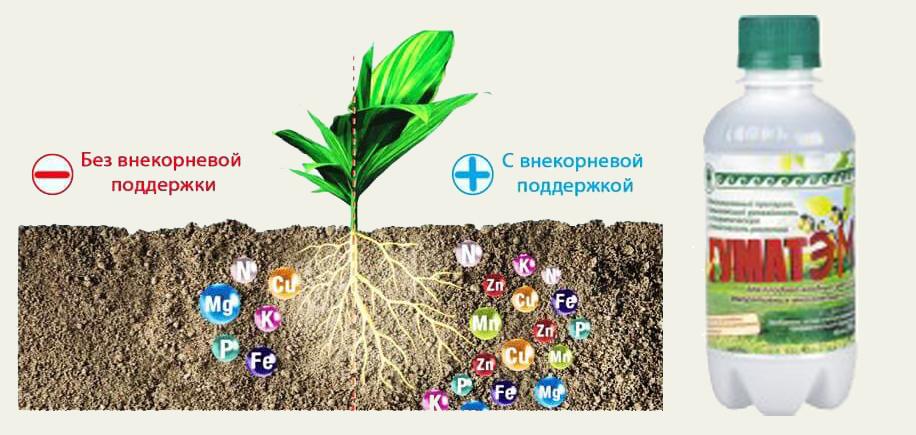 ГуматЭМ для корневой и внекорневой подкормки рассады