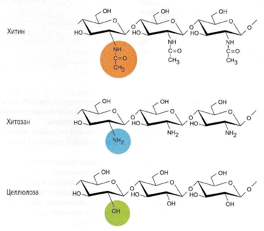 Структура хитина, хитозана и целлюлозы