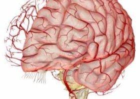 Как сохранить мозг
