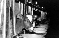 ЭМ-технология при выращивании животных