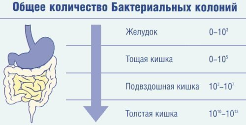 konovalova-golaya-foto
